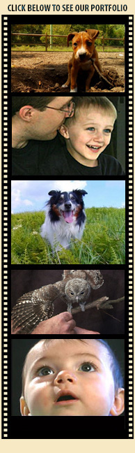 Dog Speak Ashville Ny Reviews
