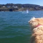 Kida watching whales, Depoe Bay, Oregon, September 2014