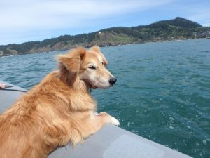 Kida on the ocean after jaw surgery May 2016